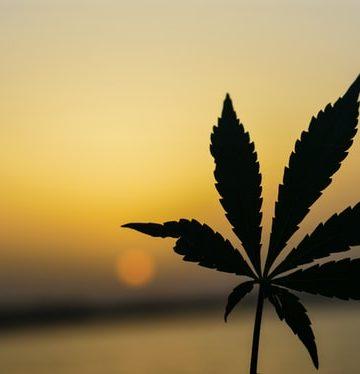 Fresh Marijuana
